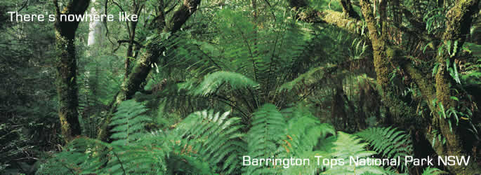 Australia National Parks Barrington Tops