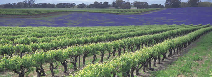 Holiday In The Famous Wine Region Of Clare Valley South